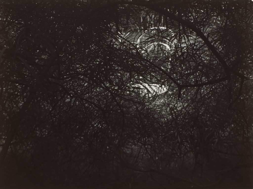 Josef Sudek, Lace in the Magic Garden, 1954–1959 gelatin silver print, 16.9 × 22.9 cm National Gallery of Canada, Ottawa. Gift of an anonymous donor, 2010. © Estate of Josef Sudek.