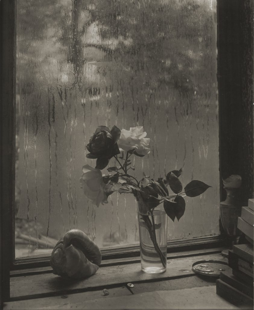 Josef Sudek, Last Rose, 1956 gelatin silver print, 28.2 × 23.2 cm National Gallery of Canada, Ottawa. Gift of an anonymous donor, 2010. © Estate of Josef Sudek.
