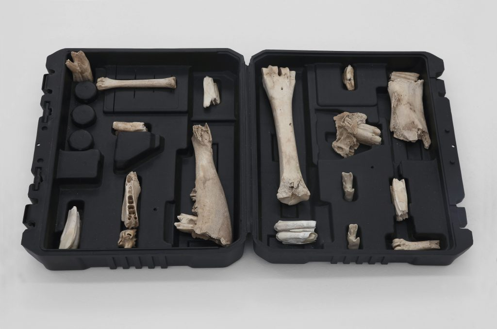 Nicolás Lamas Tools (2016) Plastic case, animal bones cm. 5.5x56.5x33 (in. 2 1/8x22 1/4x13). Courtesy of Brand New Gallery.