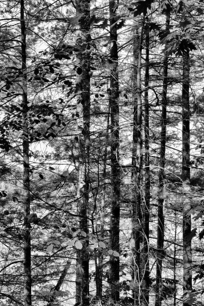 Moritz Wegwerth, Shaker Trees, 2016 Inkjet print in Artist´s frame, 220 x 147cm © Moritz Wegwerth, VG Bild-Kunst Bonn, 2016 Courtesy Sprüth Magers