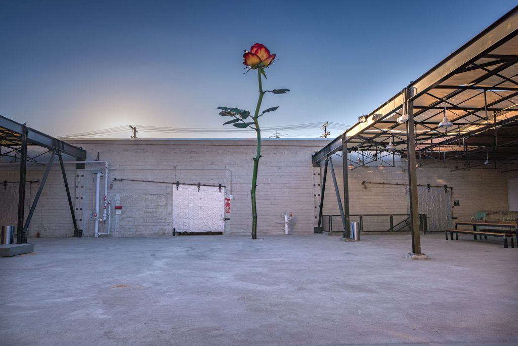 Isa Genzken, 'Rose III' (2016), Installation view, Hauser Wirth & Schimmel, 2016. Courtesy the artist, Hauser & Wirth and Galerie Buchholz Cologne / Berlin / New York. © Artists Rights Society (ARS) New York / VG Bild-Kunst, Bonn Photo: Phoebe Solomon